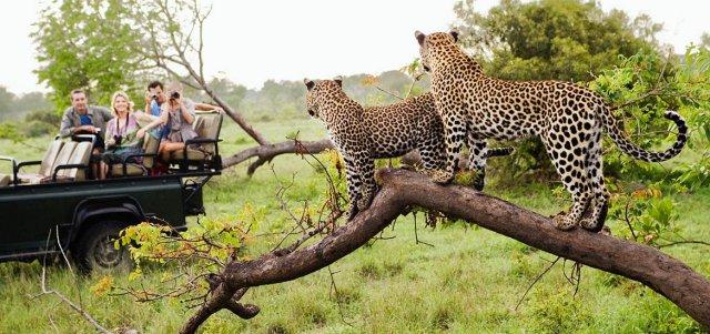 آفريقاي جنوبي با طبیعتی رویایی