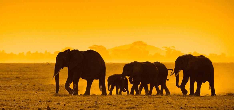 کنیا آفریقا آژانس دیبا